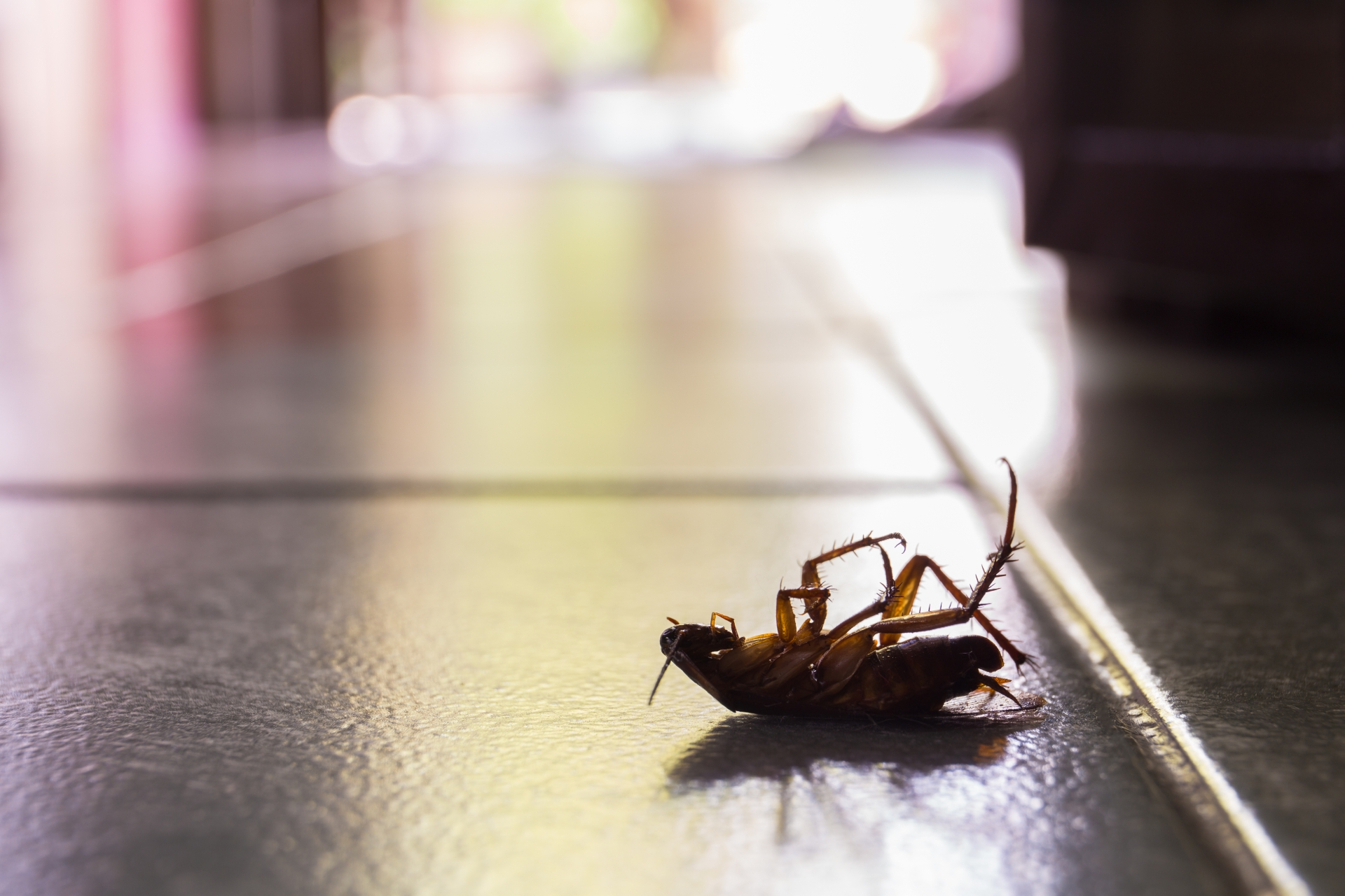 Cockroach Control, Pest Control in Plumstead, SE18. Call Now 020 8166 9746
