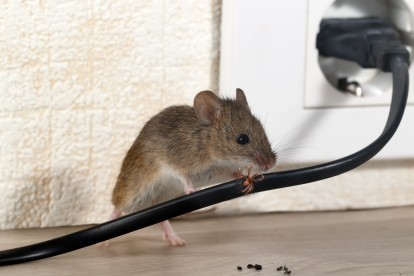 Pest Control in Plumstead, SE18. Call Now! 020 8166 9746