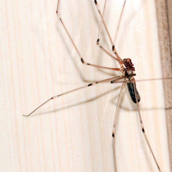 Spiders, Pest Control in Plumstead, SE18. Call Now! 020 8166 9746